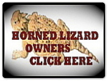 horned lizard with title