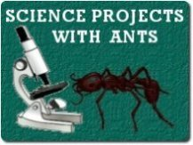 image of microscope and ant